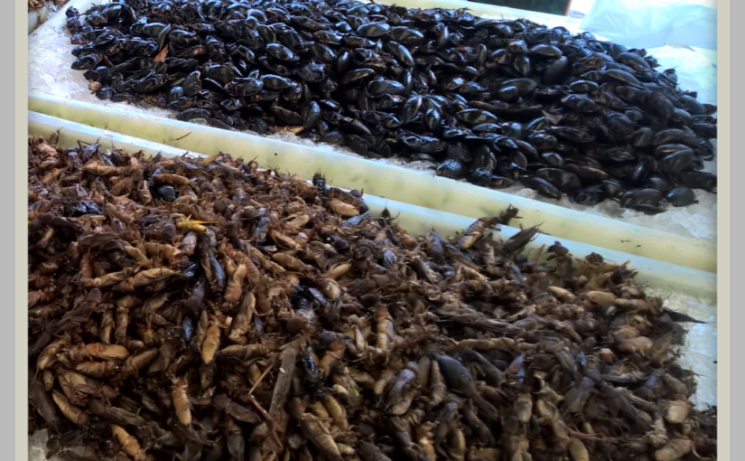 Market Insects